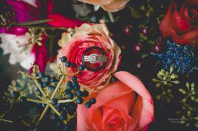 Alanna Allen Photography