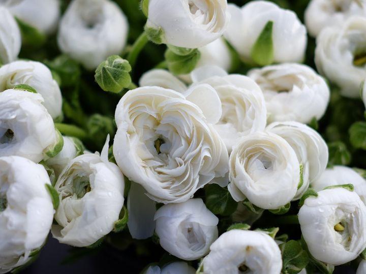 Tmx Ranunculus 2 51 1049609 Florence, MT wedding florist
