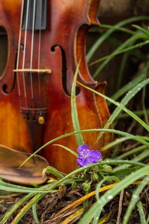 Stephanie's Violin