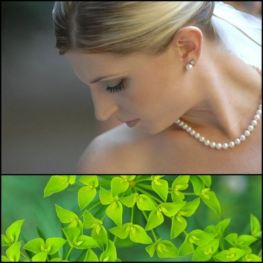 BrideGreenPlant01