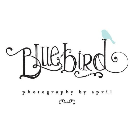 Bluebird Photography