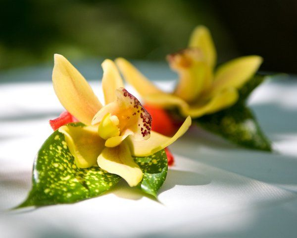 Small corsages of cymbidium orchids and speckled foliage.
