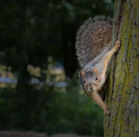Squirrel at a park