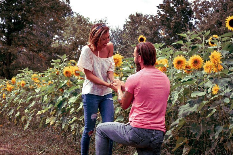 Sunflower field proposal