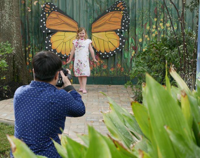 butterfly mural 1 51 930619 1559414193