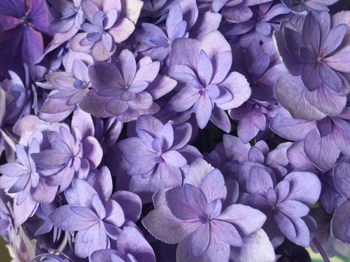 Tmx 1498981921169 Img4503 Amity wedding florist