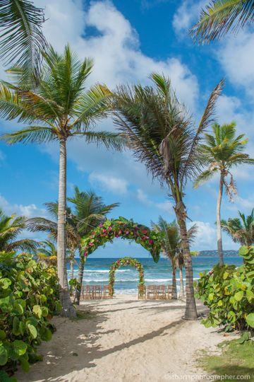 Coconut's walk