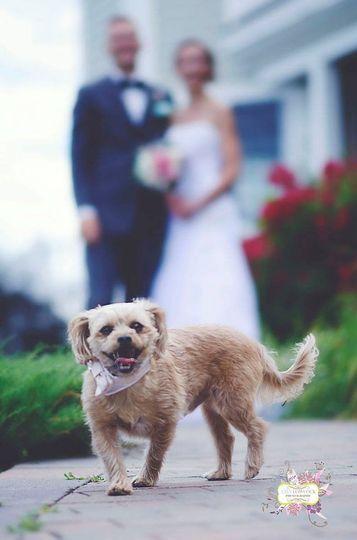 Couple's dog
