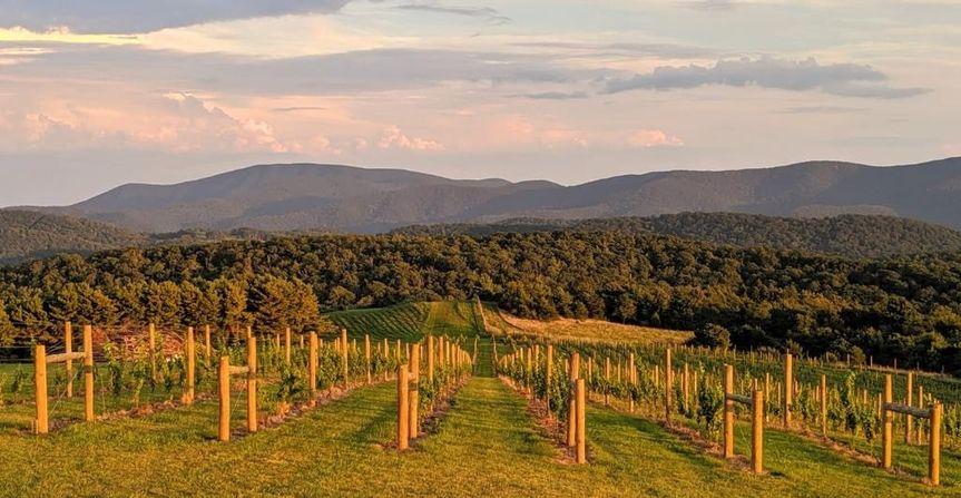 Vineyard - 12 Ridges