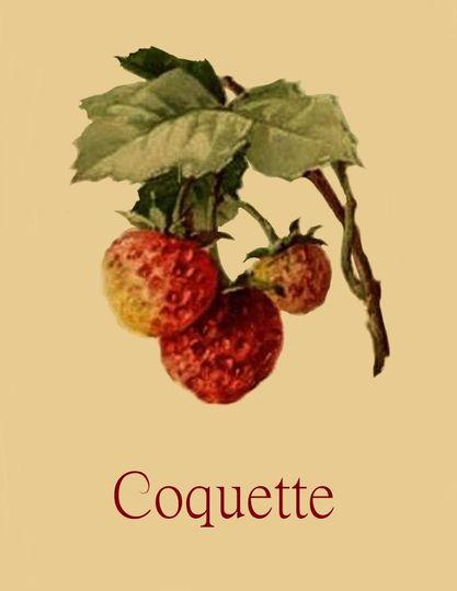 8x11 coquette1 1 51 1902029 158777730117090