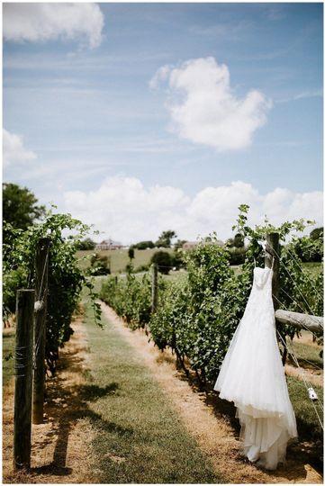 Vineyard pathway | Sarah Mosher Photography