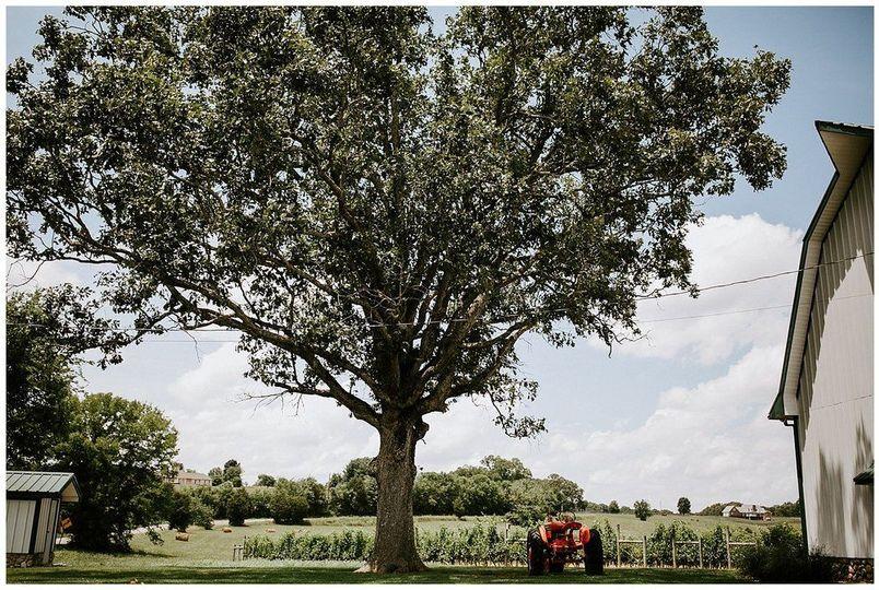 Tree beside the barn | Sarah Mosher Photography