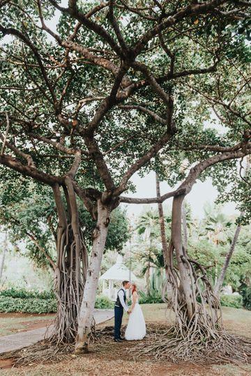 Kissing Tree - Sheraton Kona
