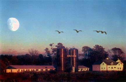 alfalfa farm winery8