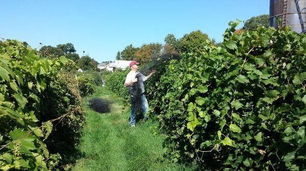 Alfalfa Farm Winery farm