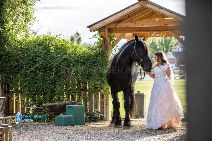 A Horse For The Bride
