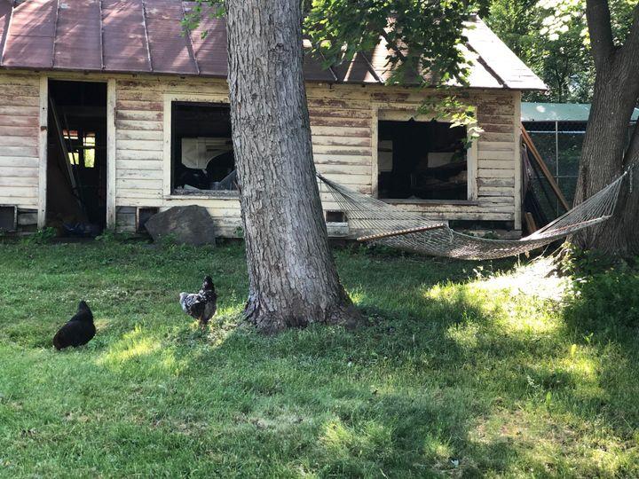 Hens and henhouse