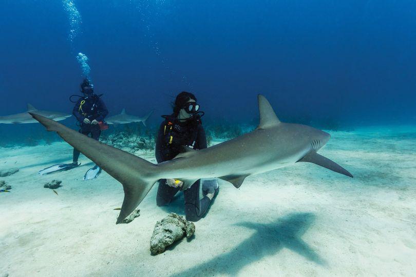Shark swim
