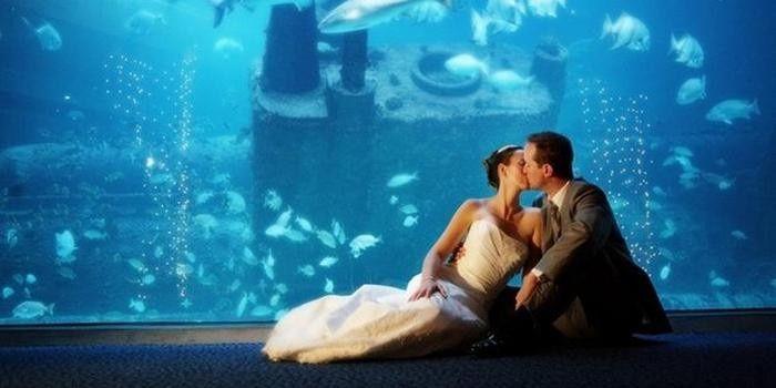 NC Aquarium Wedding