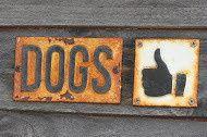 Tmx 1449253327740 Dogs Yes Pacific Beach, WA wedding venue
