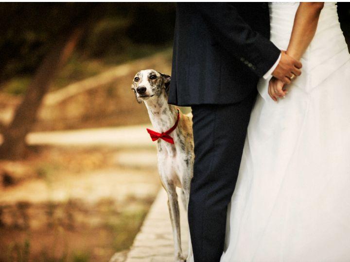 Tmx Dog 51 2017139 162387199314218 Allentown, PA wedding venue