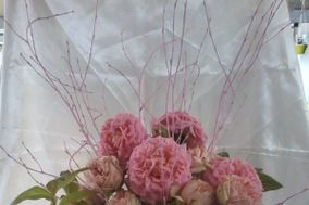Giovanna Romagnoli piante fiori eventi