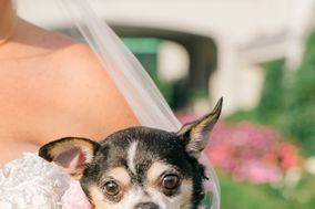 Wedding Puptials