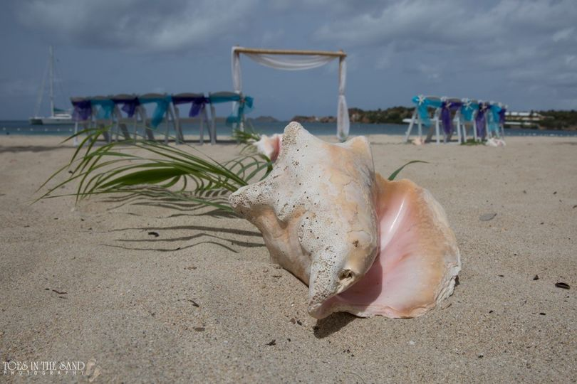 conch shell aisle