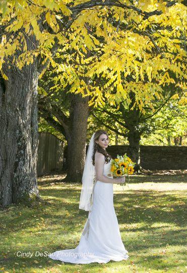Fall Foliage & Mature Trees