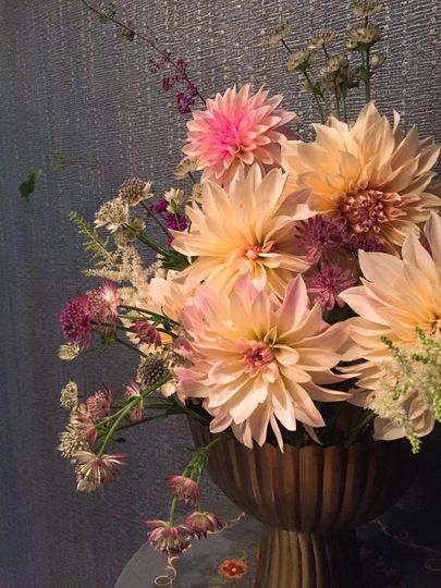 Dahlias magic