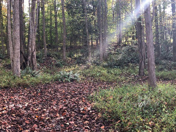 Fern Ridge Trail
