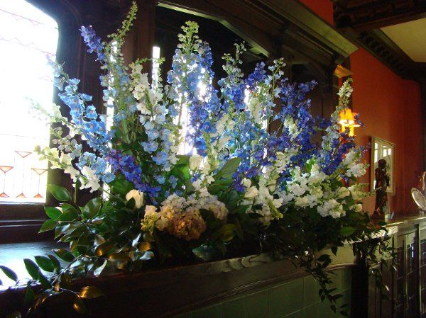 Beautiful display of white and blue hybrid delphinium.
