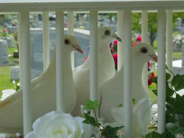 White Dove Release www.ocdoves.com