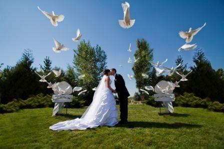 White Wedding Dove Release www.ocdoves.com 714-903-6599