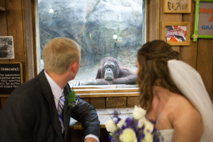 Wedding at the Rainforest at Cleveland Metroparks Zoo