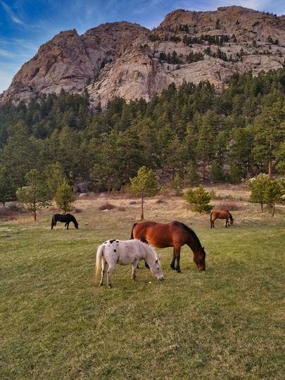 Ranch horses grazing