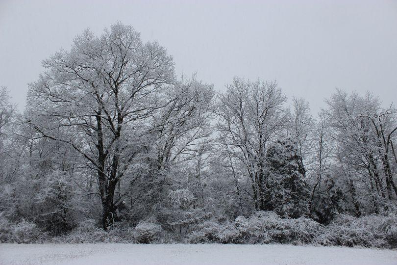 Winter at Hazelwood