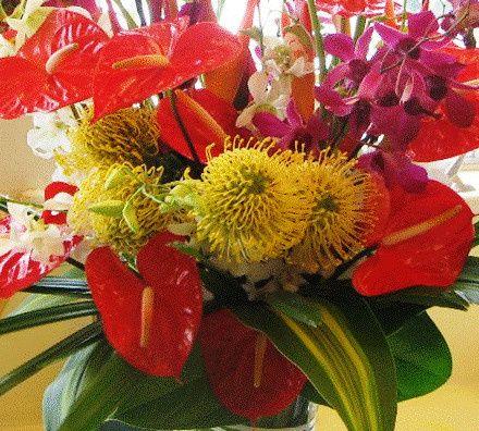 tropical hawaii flowers