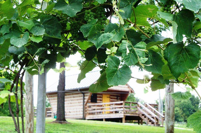 c4139bc72a1ecca1 winery thru grapes web