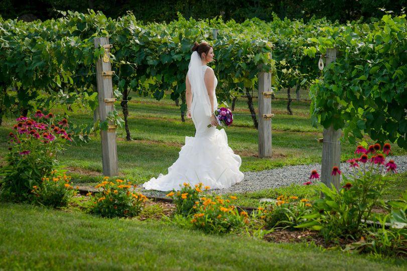 Bride at the vineyard