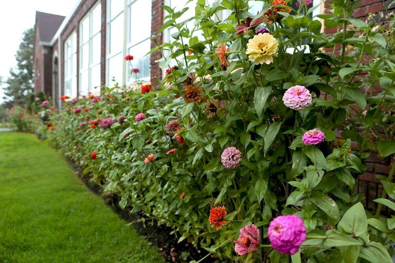 frontflowers