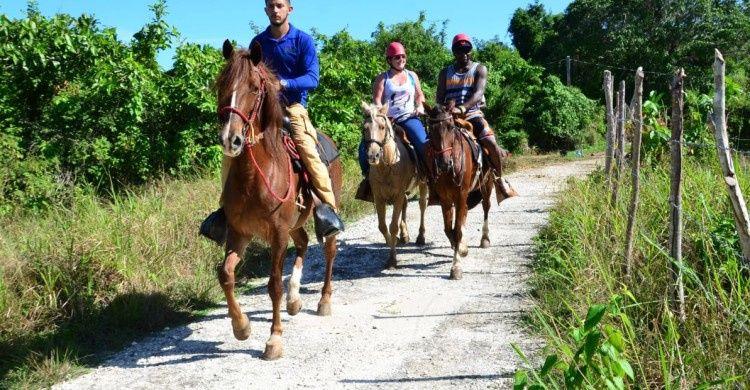 horses 51 1075059 1561932914