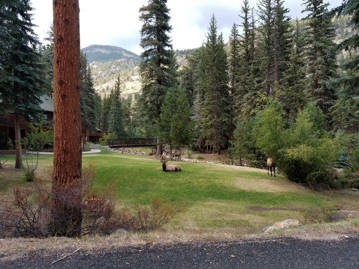 Tmx Elk On Tent Site 51 456059 Estes Park wedding venue