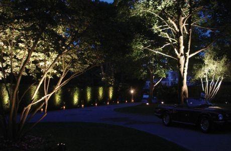 Tmx 1403673243937 Uplightstrees San Francisco, California wedding eventproduction