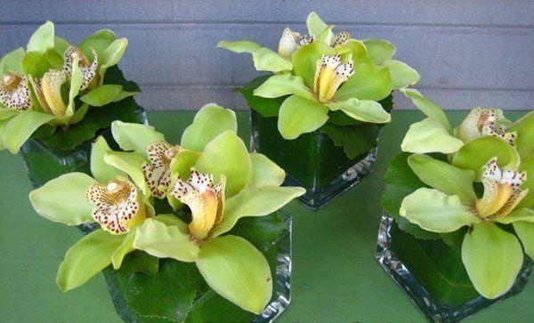 Cymbidium Orchids Cube centerpieces...