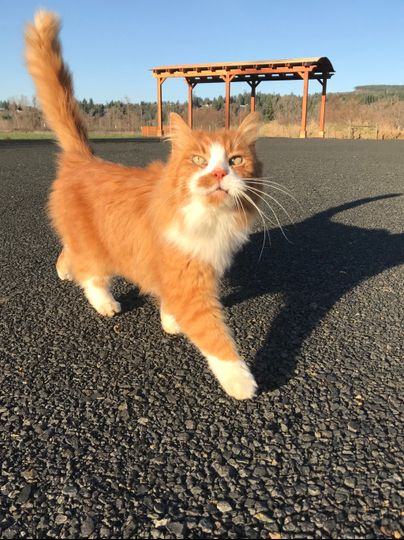 Barn cat Edward says hello