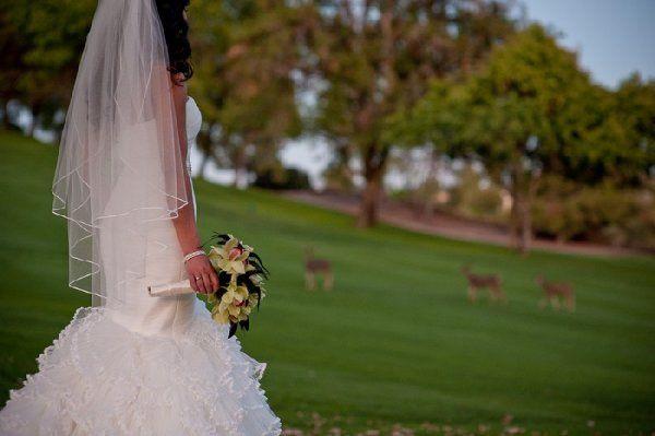 BridewithDeer