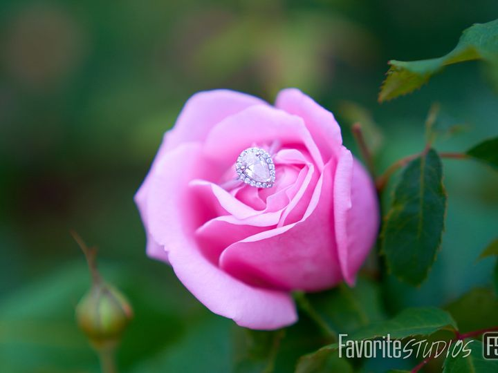 Tmx 1515278365 0a187090737f1440 1515278362 73891c43d765ddf4 1515278361604 3 DSC03723 Saint Augustine, FL wedding photography