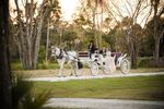 Sweet Southern Horse & Carriage image