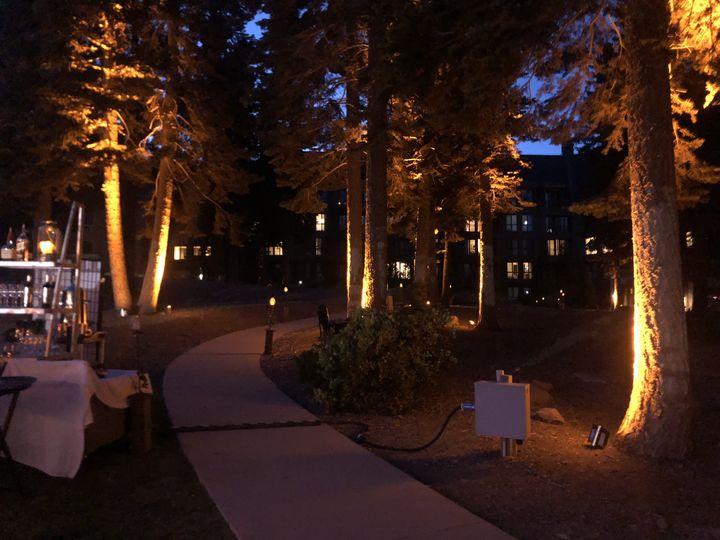 Tree uplighting